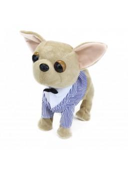 Gos Chihuahua moviments i sons